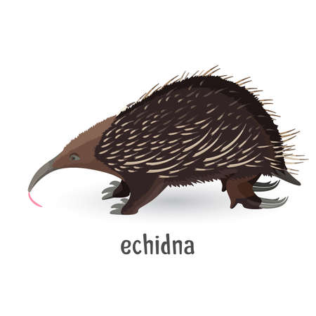 Echidna covered with coarse hair and sharp needles