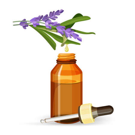 Lavender extract oil in glass bottle with pipette. Fragrant wild flower in form of liquid substance in special container isolated vector illustration. Ilustração