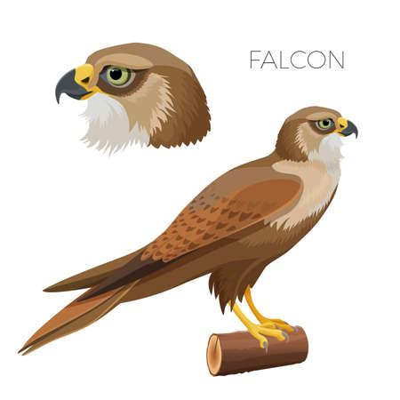 Falcone dagli occhi verde brillante con testa e uccellino su legno