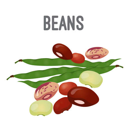 Organic natural beans of all species with high calorie contain