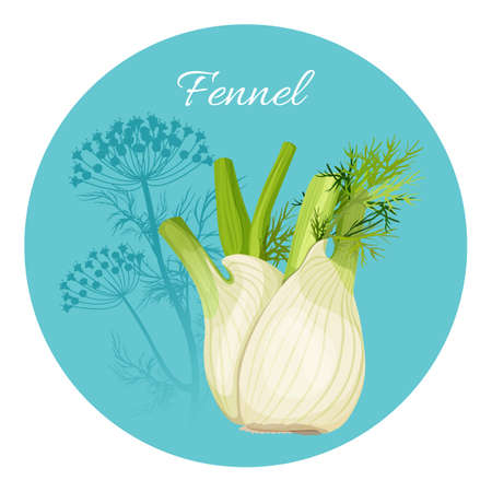 Fennel condiment green seasoning with edible root bulb-like stem