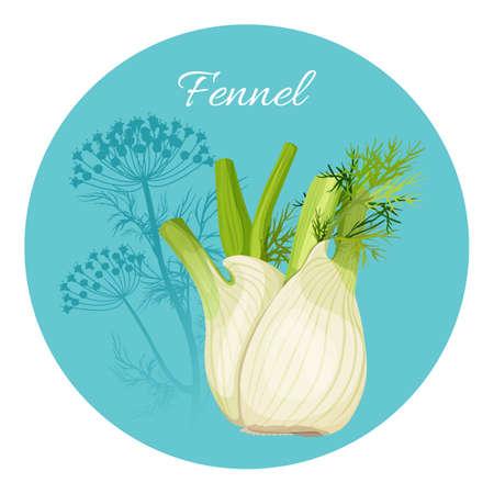 Condimento al finocchio condimento verde con radice commestibile a bulbo Vettoriali