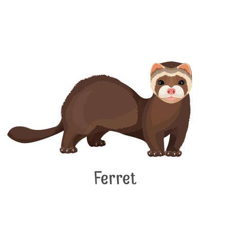 Ferret domesticated form of European polecat vector