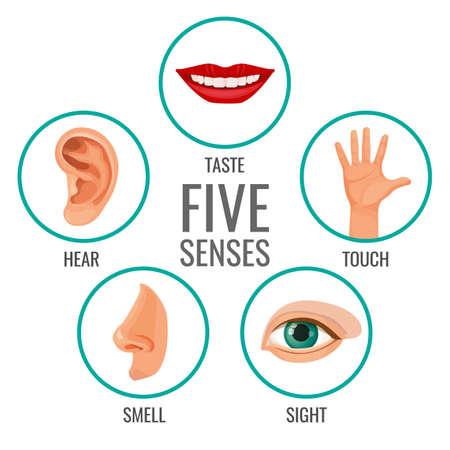 Cinque sensi delle icone del manifesto di percezione umana. Gustare e ascoltare, toccare e annusare, vedere i sentimenti umani. Parti del corpo disposte in cerchi illustrazione vettoriale Vettoriali