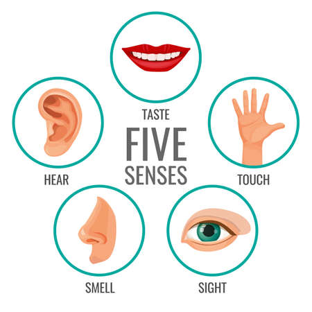 Five senses of human perception poster icons. Taste and hear, touch and smell, sight human feelings. Body parts set in circles vector illustration