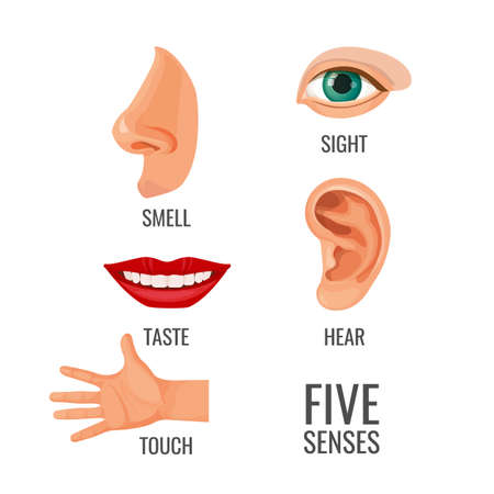 Five senses with titles at body parts. Smell, sight and touch, hear and taste vector illustration. Methods of perception and sense, organs helping to feel