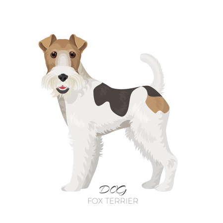 Fox terrier isolated on white backdrop purebred dog 矢量图像
