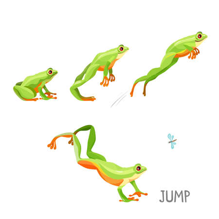 Bright colored frog jumping cartoon vector illustration. Steps of anuran jump sitting and moving up, coming off ground and touching down and looking at fly icon