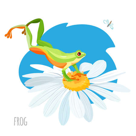 Frog jumping on chamomile vector isolated. Touching down flower toad looking at bug, on blue stain in cartoon style. Anuran jumper hunting on insect Ilustração