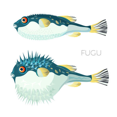 Fugu fish japanese puffer in realistic design. Sea animal, poisonous with puffed needle stomach icon for seafood cuisine, market and restaurant menu, vector Illustration