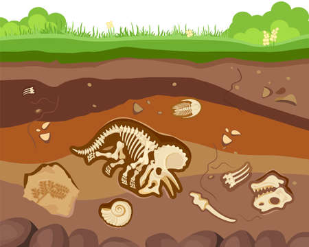 Soil ground layers with buried fossil animals, dinosaur, crustaceans and bones.