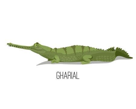 Gharial crocodile reptile animal.