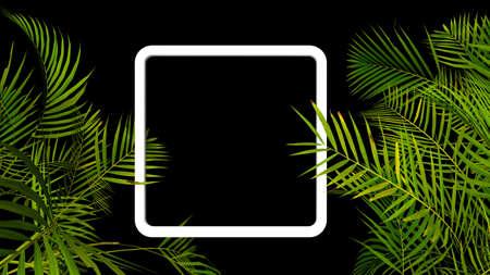 Tropical palm plant leaf on black background. Nature summer illustration. 3D render