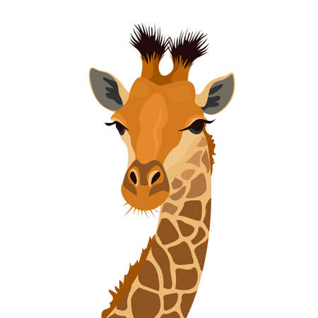 Giraffe head isolated on white. African animal mammal portrait. Vector illustration