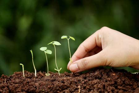 Plant growth-New beginnings