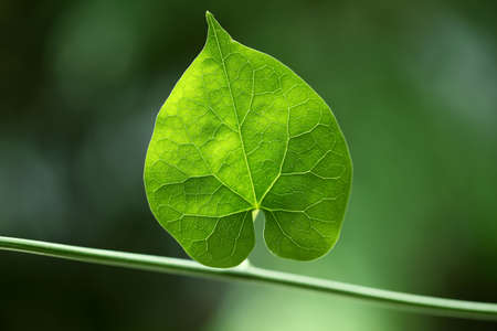 forestation: Closeup of green leaves