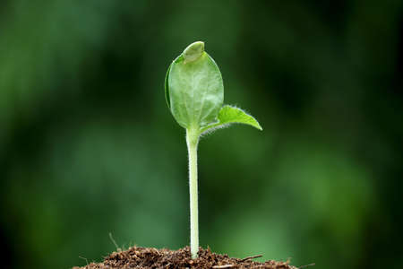 Closeup of young plant growing from soil Stock Photo