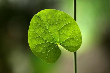 Closeup of green leaves