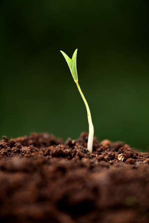 forestation: Plant growth-New beginnings