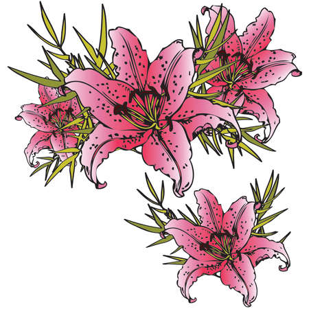 tiger lily: Pink Lily
