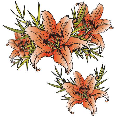 tiger lily: Orange tiger lillies