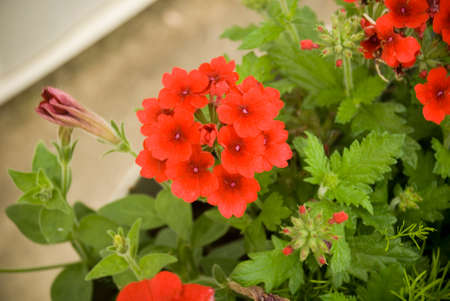 potted plant: Red potted plant
