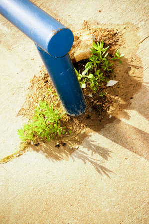 poking: Weeds poking out of concrete 2