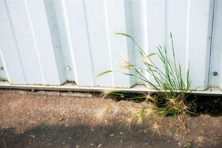 poking: Weeds poking out of Concrete Stock Photo