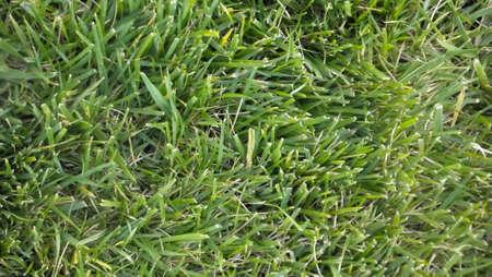 Grass Texture Reklamní fotografie