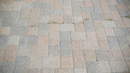greys: Brick walk way with moss peeking through