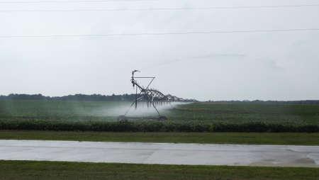 pivot: Pivot spraying on Bean field Stock Photo