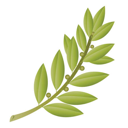 Simple Olive Branch with Fruit Ilustrace