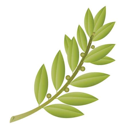 fruit stem: Simple Olive Branch with Fruit Illustration