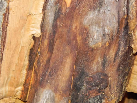 Split wood texture Stock Photo
