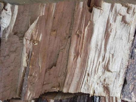 Split wood texture Stock Photo