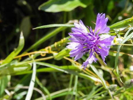 Small purple wildflower Stock Photo