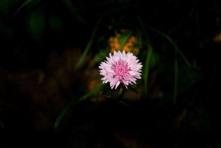 pink wildflower closeup photo Banco de Imagens