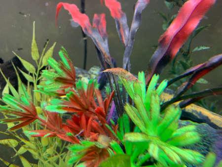 Colorful plastic aquarium plants Stockfoto
