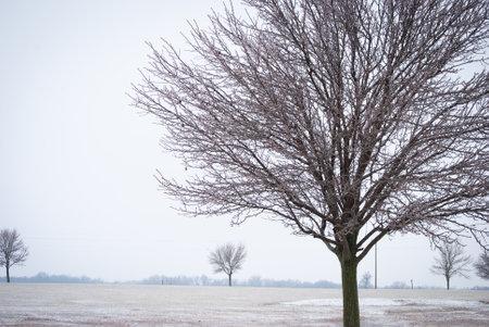 Iced tree in wintery field