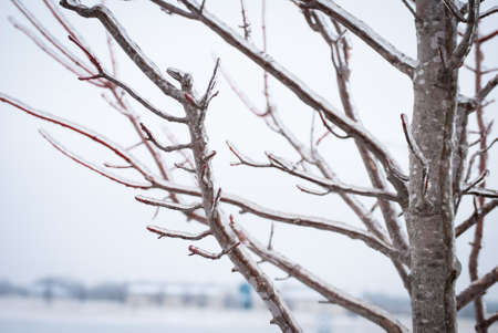 Ice on Tree Branches in winter Stockfoto
