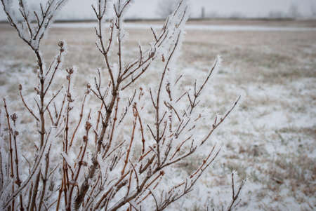 Frost covered tree branches
