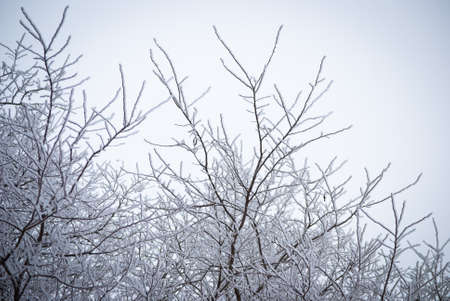 frost covered forest