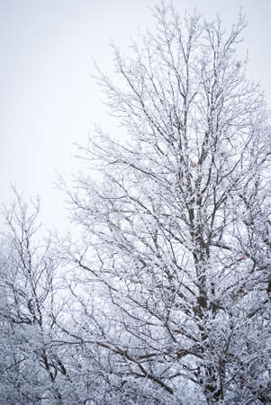 frost covered tree Stockfoto