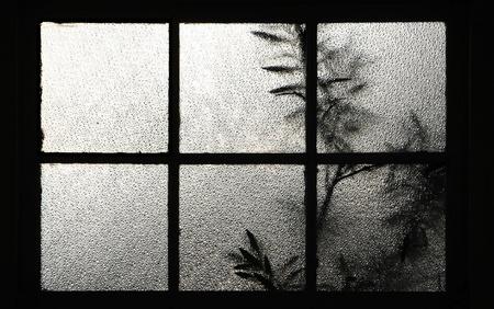 boom achter een raam Textuur van matglas