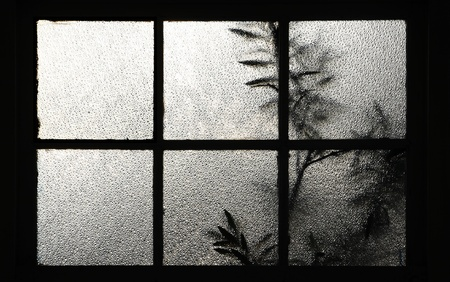 tree behind a window Texture of frosted glass 免版税图像