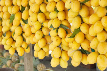 Marian plum or Maprang-tropical fruit in Thailand