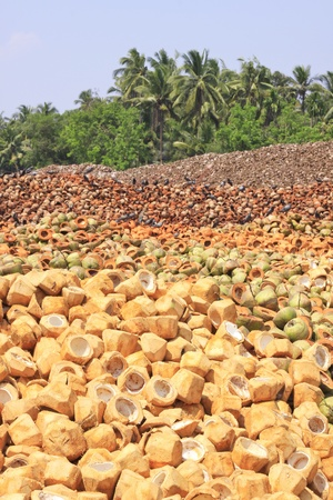 Pile of discarded coconut husk in Thailand  photo