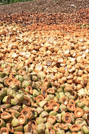 Pile of discarded coconut husk in coconut farm Thailand Stock Photo