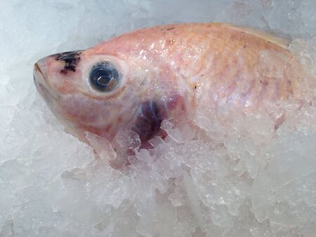 Fresh Red tilapia fish on ice for sale Stock Photo