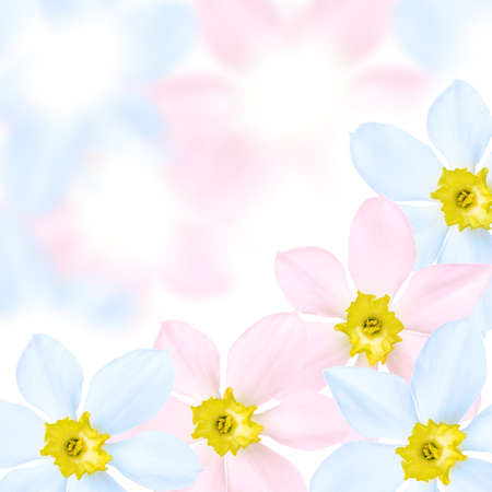 Colored flower on the colored background Stock Photo